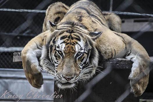 Animal by Kaisy Chevalier