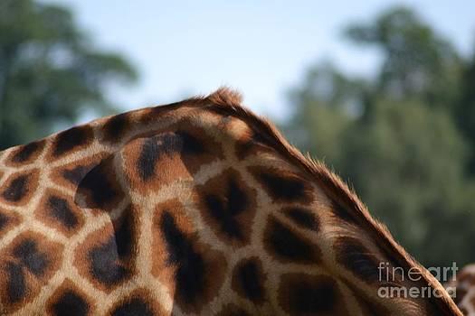 Animal Patchwork by Stephanie Guinn