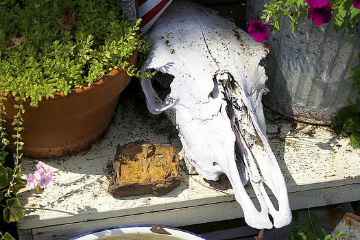 Animal Skull  by Danielle Allard