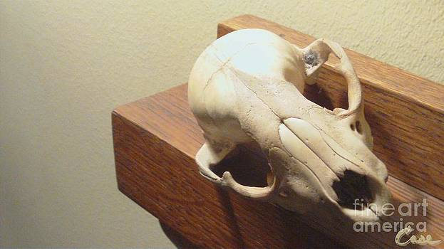 Feile Case - Animal Skull Mantel 2 12 2011