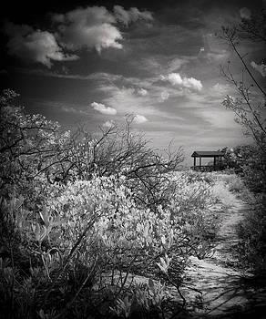 Annes Beach Matecumbe Key Florida by Bradley R Youngberg
