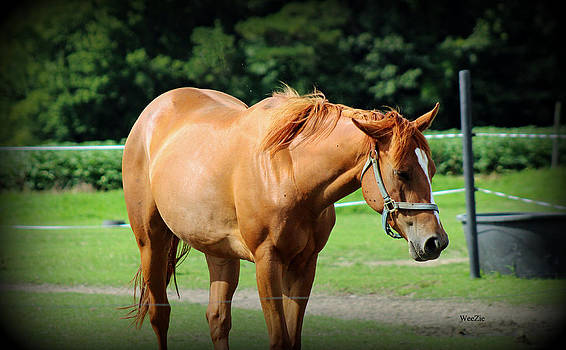 Another Horse Photo by Carolyn Ricks