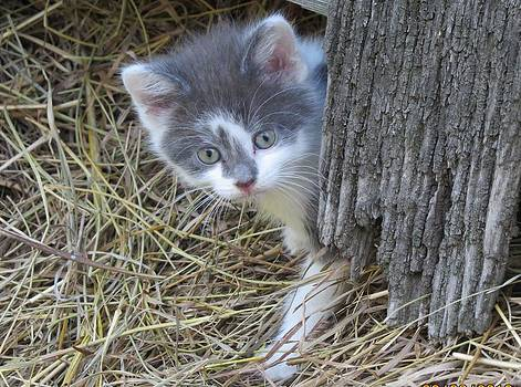 Another kitten by Diane Mitchell