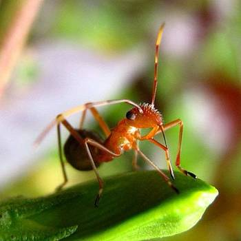 Ant #insects #insect #bug #bugs by Dani Daniar