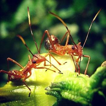 Ant #macro #micro #ant #animal #world by Dani Daniar