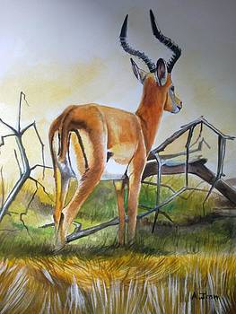 Antelope by Andrick Jean
