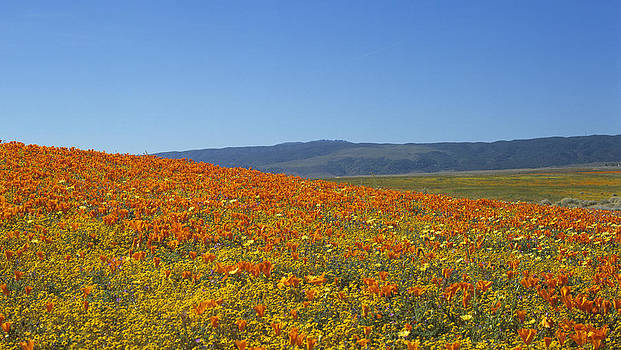 Susan Rovira - Antelope Valley Gold