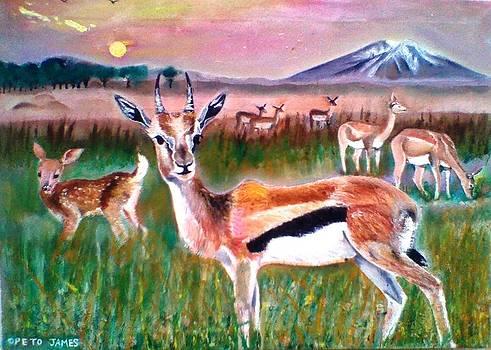 Antelopes by James Opeto