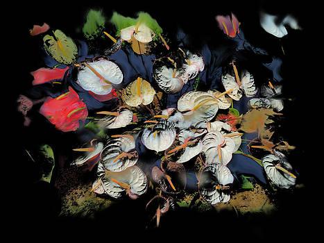 Usha Shantharam - Anthurium Bunch