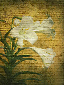 Maria Holmes - Antique Easter Lily
