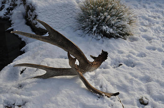 Antler 4 by Heather L Wright
