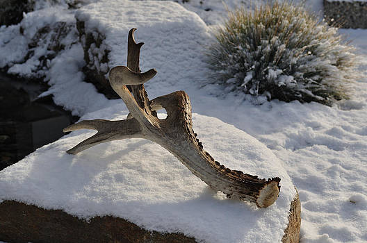 Antler by Heather L Wright