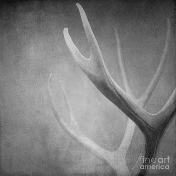 Antlers by Sharon Kalstek-Coty