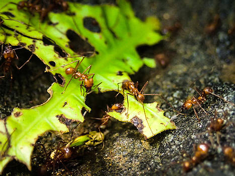 Ants At Work by Tyler Lucas