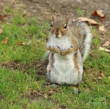 Any Nuts? by Ellen Ryan