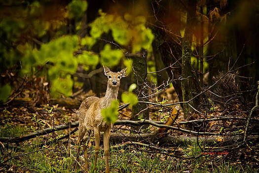 Anyone There? by Timothy J Berndt
