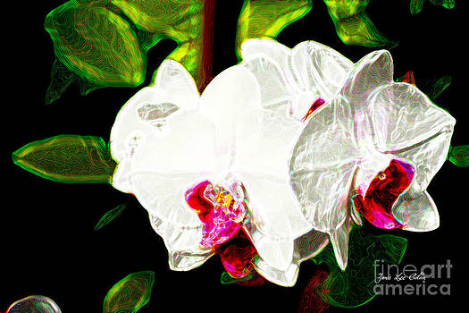 AOS White Orchid 2 by Janis Lee Colon