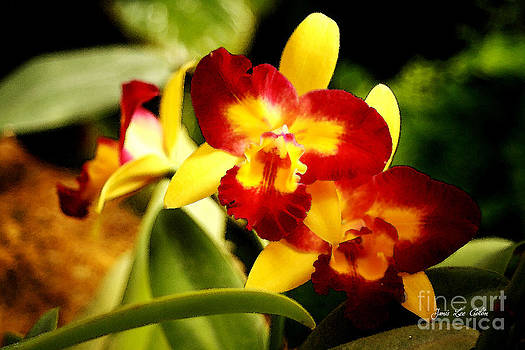 AOS Yellow Orchid 2 by Janis Lee Colon