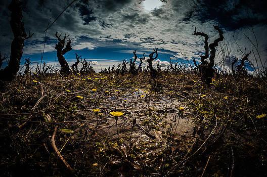 Apocalypse Spring by Gilbert Wayenborgh