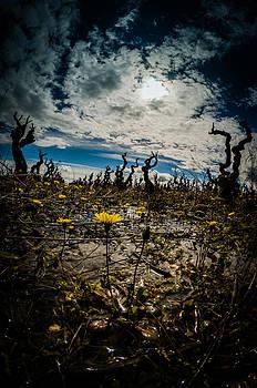 Apocalypse spring II by Gilbert Wayenborgh