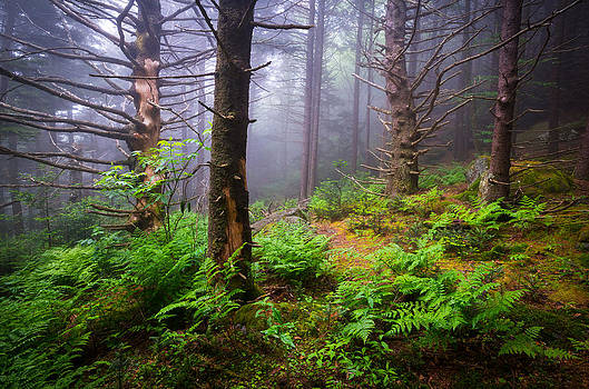 Appalachian Trail Blue Ridge Mountains NC Forest by Dave Allen