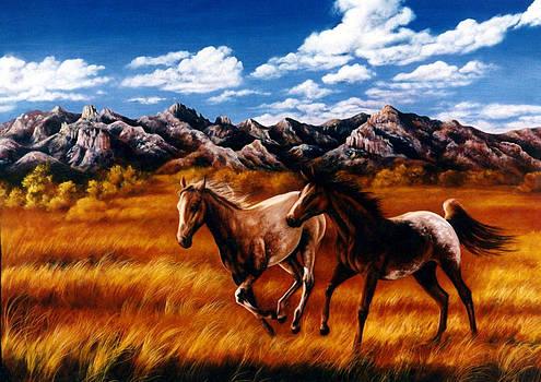Appaloosa Horses by Glenda Stevens
