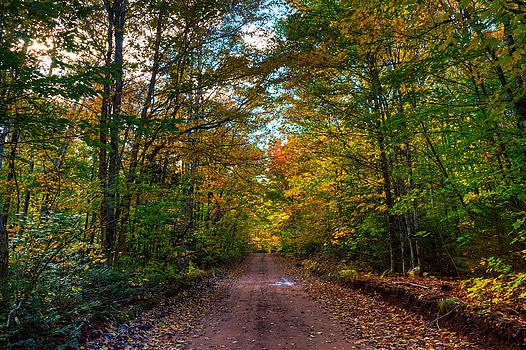 Matt Dobson - Appin Road in Autumn