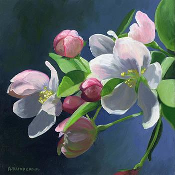 Apple Blossom by Alecia Underhill