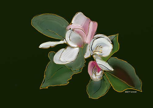 Apple blossom by Brett Shand
