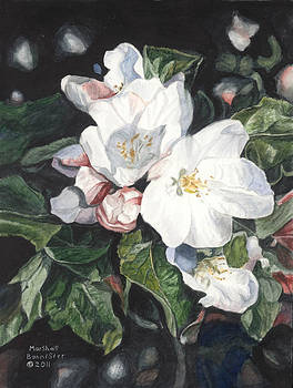 Apple Blossom by Marshall Bannister