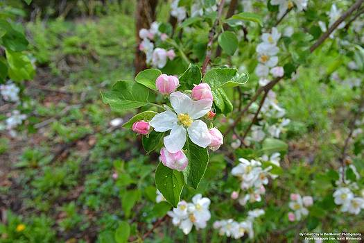 Apple Blossom by Michelle and John Ressler