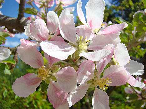 Baslee Troutman - Apple Blossoms Art Prints Spring Trees