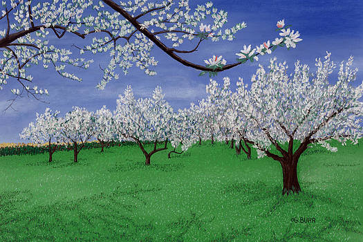 Apple Blossoms by George Burr