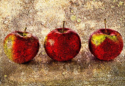 Apple by Bob Orsillo