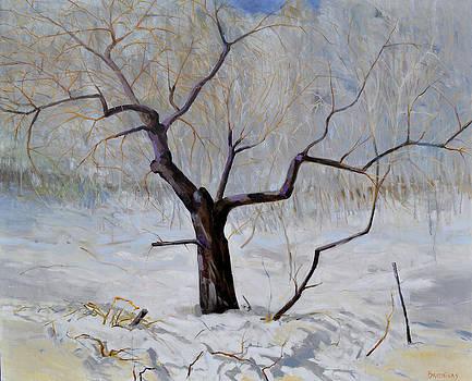 Apple tree in winter  by Arturas Braziunas