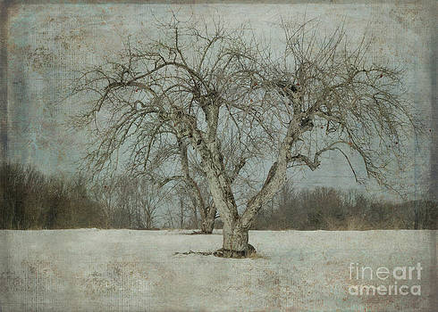 Apple Tree in Winter by Vicki DeVico