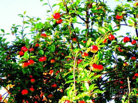 Pauli Hyvonen - Apple tree