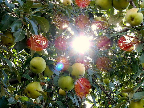 Yuriy Vekshinskiy - Apples and sun