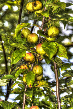 Mother Nature - Apples For Wildlife
