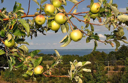 Apples over Grand Traverse Bay by Diane Lent