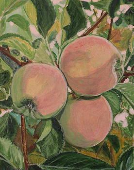 Apples by Vera Lysenko