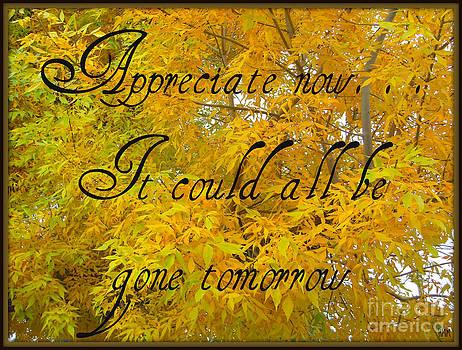 Appreciate Now by Heidi Manly