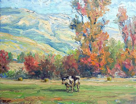 Approaching steer by Lynn T Bright
