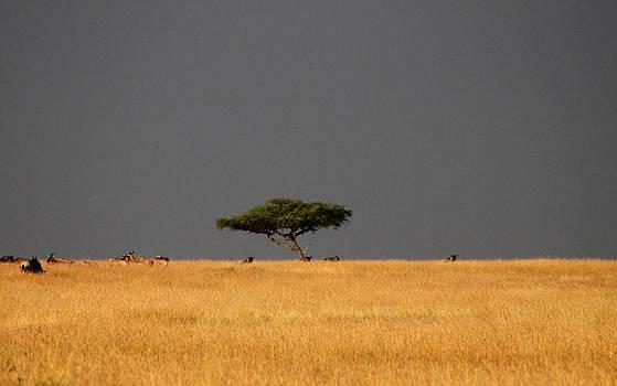 Mauverneen Blevins - Approaching Storm Kenya