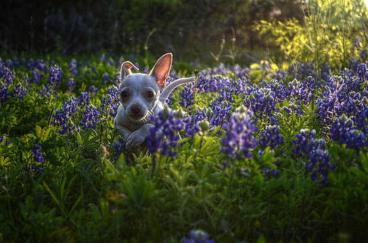 April My Shelter Rescue by Kelly Kitchens