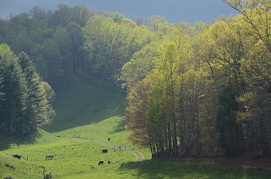 April Pasture by Cecile Brion