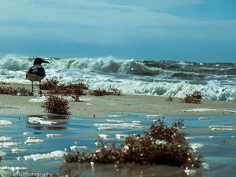 Aqua surf  by Kim Loftis