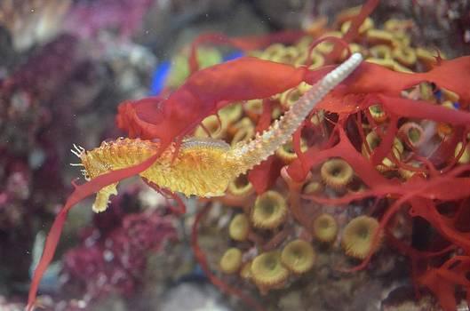 Aquarium Fun by Chandra Wesson