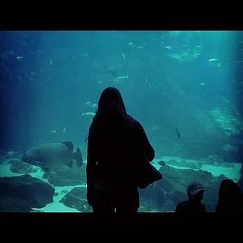 Aquarium by Kahsha Ward