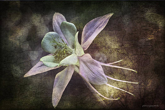 Aquilegia by Penny Roberts